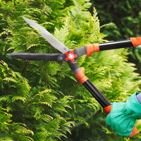 Sövényvágó olló - 200 mm 11283B